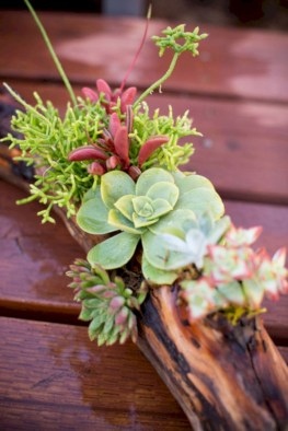 Ideas to arrange your succulent with driftwood 19